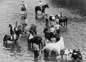 Appleby Horse Fair, Cumbria 1978. Washing horses in the river - David Mansell - ,1970s,1978,animal,animals,Appleby Horse Fair,communities,community,Domesticated Ungulates,equestrian,equine,Fair,gipsey,Gipsey Gipsy Gypsey,Gipsies,Gipsy,gypse,gypsey,Gypsie,Gypsies,Gypsies Traveller