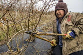 Lynden, USA Modesto Hernandez of Familias Unidas por la Justicia pruning blueberry bushes at a new cooperative. Hernandezs feet were amputated after suffering frostbite in a freezing field and he cann... - David Bacon - 03-04-2018
