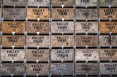 Washington, USA: Fruit boxes stacked awaiting the beginning of the apple harvest  Copyright David Bacon - David Bacon - 16-07-2018