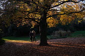 Young couple walking through Victoria Park with their dog on a sunny autumn evening, Tower Hamlets, East London - Jess Hurd - 21-11-2018