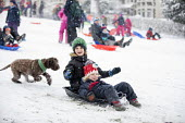 Children having fun in the snow, St Andrews Park, Bristol - Paul Box - 2010s,2018,2019,animal,animals,boy,boys,canine,child,CHILDHOOD,children,cities,City,CLIMATE,conditions,dog,dogs,enjoy,enjoying,enjoyment,excited,excitement,exciting,female,females,freezing,frozen,girl
