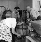 Wine production, Hambledon vineyard, Hampshire 1959. It was the first vineyard to be planted specifically to produce wine for sale since 1875 - so the planting of the Hambledon vineyard eight years pr... - Alan Vines - 1950s,1959,1st,agricultural,agriculture,alcohol,barrel,barrels,British,business,capitalism,capitalist,country,countryside,crop,crops,cultivation,EBF,Economic,Economy,employee,employees,Employment,Engl