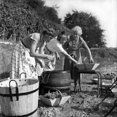 English winegrowing, Hambledon vineyard, 1959