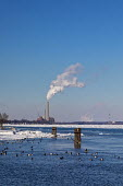 Marine City, Michigan, USA: DTE Energy coal and oil fired St. Clair power station on the U.S. side of the ice filled St. Clair River. Canvasback ducks swim in open water near shore - Jim West - 2010s,2019,Air Pollution,Air Quality,America,animal,animals,Aythya valisineria,bird,birds,Blue Sky,border,C02 Emissions,CAN124,Canada,Climate Change,coal fired,cold,Detroit Edison,diving duck,DTE Ener