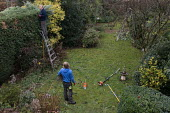 Tree Surgeon and gardeners at work. - John Harris - 2010s,2019,business,cut,cutting back,DAD,DADDIES,DADDY,DADS,domestic,EBF,Economic,Economy,employee,employees,Employment,families,family,father,FATHERHOOD,fathers,garden,gardener,gardeners,gardening,ga
