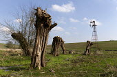 Pollarded willow trees and derelict water windpump, Shill Brook, Oxfordshire - John Harris - 2010s,2019,agricultural,agriculture,broken,country,countryside,derelict,DERELICTION,EBF,Economic,Economy,farm,farmed,farmland,farms,field,fields,outdoors,outside,Pollarded,rural,stream,stumps,tree,tre
