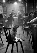 Dog sitting with its glass of beer, Munich Bier Theater Germany 1949, locals being entertained in a Beer Theater. These venues provided family entertainment for both young and old - Hannes Rosenberg - 1940s,1949,ace,acting,actor,actors,alcohol,animal,animals,Arts,beer,beer hall,beers,BierTheater,canine,culture,dog,dog and beer,dogs,entertainment,families,family,GERMAN,Germany,glass of,glasses,havin