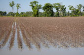 Yazoo County, USA, Mississippi Delta flooding. High volume of spring rainfall has caused widespread flooding of farmland preventing the planting of crops - Jim West - 16-05-2019