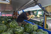Immokalee, Florida, USA: Migrant workers unloading watermelons onto conveyer belts, Pequeno Harvesting packing shed. The melons are transported from the fields in old buses from which seats and window... - Jim West - 2010s,2019,agricultural,agriculture,America,american,americans,bus,bus service,buses,by hand,Cantaloupe,capitalism,crop,crops,Diaspora,EARNINGS,EBF,Economic,Economy,employee,employees,Employment,farm,