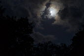 Moon, clouds and trees - John Harris - 14-06-2019