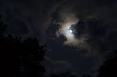 Moon, clouds and trees - John Harris - 2010s,2019,cloud,clouds,ENI,environment,Environmental Issues,Moon,moonlight,nature,night,night time,night times,nights,sky,THE ATMOSPHERE,tree,trees