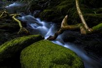 Dolgoch Falls, Snowdonia National Park, Tywyn, Wales - Jess Hurd - 24-06-2019