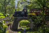 Restored Edward Thomas narrow gauge steam locomotive, built in 1921, carrying tourists on the volunteer run, Heritage Talyllyn Railway, Dolgoch Falls Station, Tywyn, Snowdonia National Park, Wales. - Jess Hurd - 2010s,2019,ACE,attraction,carriage,carriages,carries,carry,carrying,Culture,Dolgoch Falls,driver,drivers,driving,Edward Thomas,heritage,holiday,holiday maker,holiday makers,holidaymaker,holidaymakers,