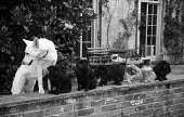Diffrerent breeds of dogs sitting on garden wall of country house Aldeburgh 1955 - Kurt Hutton - 1950s,1955,animal,animals,breed,breeds,canine,country,countryside,dog,dogs,farmhouse,garden,GARDENS,house,houses,landscape,LANDSCAPES,LFL,LIFE,outdoors,outside,OWNERSHIP,PEOPLE,pet,pets,rural,sitting,