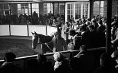 Tattersalls Newmarket Stables Cambridgeshire 1958. Buyers conducting their research at the annual bloodstock auction sales for racehorses - Kurt Hutton - 03-12-1958