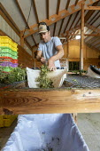 Michigan, USA: Workers harvesting hemp at the Paw Paw Hemp Company, worker stripping the flower heads and leaves from the hemp stalks. Many American farmers harvested their first crop in 2019 after gr... - Jim West - 1st,2010s,2019,agricultural,agriculture,America,American,americans,by hand,cannabidiol,cannabis,cannabis sativa,capitalism,capitalist,CBD,Company,crop,crops,DRUG,DRUGS,EBF,Economic,Economy,employee,em