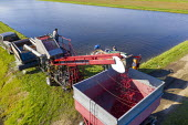 Michigan, USA: Workers harvesting cranberries, DeGRandchamp Farms. The cranberry bog is flooded allowing the floating fruit to be collected. - Jim West - 2010s,2019,aerial,agricultural,agriculture,America,autumn,AUTUMNAL,bed,beds,capitalism,casual workers,cranberries,cranberry,cranberry bed,cranberry bog,crop,crops,DeGrandchamp Farms,EBF,Economic,Econo