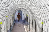 Hanksville, Utah, USA: Mars Desert Research Station. Researchers simulate living on Mars.Jennifer Lane walks through a tunnel to the science lab. Alhough not airtight, the tunnel simulates the ability... - Jim West - 13-11-2019