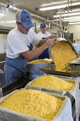 Wisconsin, USA, Master cheesemakers making Colby cheese, Union Star Cheese. Union Star is one of only a handful of small cheese factories left in Wisconsin - Jim West - 04-11-2019