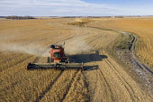 North Dakota, USA Combine harvester harvesting soybeans, Noeske Seed Farm - Jim West - 2010s,2019,aerial,agricultural,agriculture,America,american,americans,bean,capitalism,combine harvester,country,countryside,crop,crops,EBF,Economic,Economy,farm,farmed,farming,farmland,farms,field,fie