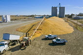 Nebraska, USA Corn harvest stored temporarily on the ground outside a grain elevator - Jim West - 14-09-2017