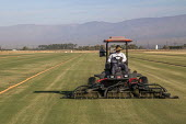Coachella, California, USA, West Coast Turf growing. A mower cutting grass on a field of turf. Plastic irrigation pipes and sprinklers irrigate the grass. The turf will be cut into rolls and taken to... - David Bacon - 2010s,2019,agricultural,agriculture,America,California,capitalism,Coachella Valley,Coast,coastal,coasts,cutting,Diaspora,dirt,driver,drivers,driving,EARNINGS,EBF,Economic,Economy,employee,employees,Em