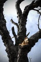 Split branch on a tree, Welcome Hills nature reserve, Stratford Upon Avon, Warwickshire - John Harris - 21-03-2020