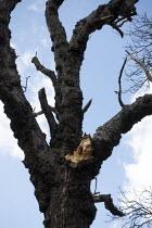 Split branch on a tree, Welcome Hills nature reserve, Stratford Upon Avon, Warwickshire - John Harris - 20-03-2020
