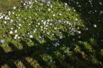 Spring flowers in a park, Stratford Upon Avon, Warwickshire - John Harris - 25-03-2020