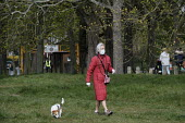 Coronavirus Pandemic, Elderly woman walking the dog wearing disposable gloves and face mask, Barnes, London - Duncan Phillips - 28-03-2020