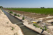 Colorado, USA, Irrigation canal, Weld County. The area gets only 15 inches of rain per year, so water for irrigation is diverted from the western side of the Rocky Mountains. - Jim West - 03-07-2020