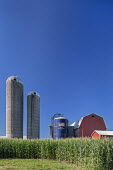Shelbyville, Michigan, Crops and grain silos on a farm - Jim West - 28-07-2020