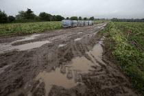 Mud and water, Harvested green bean field, Warwickshire - John Harris - 25-08-2020