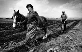 Albanian woman and her father ploughing a field Kosovo 1989 with horse and plough, near Prizren - Melanie Friend - 17-05-1989