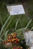 Flowers laid after Avonmouth explosion kills four. Wessex Water Treatment plant near Bristol. A chemical tank that treated biosolids exploded killing four including a teenager who were working ontop o... - Paul Box - 05-12-2020