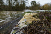 Water pollution, River Avon, Stratford upon Avon, Warwickshire. Yellow foam & rubbish on the riverbank - John Harris - 21-12-2020