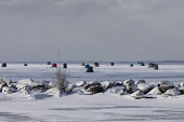 Fair Haven, Michigan, USA: Ice fishing shelters, Anchor Bay, Lake St. Clair - Jim West - 07-02-2021