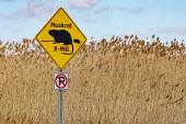 Algonac, Michigan, USA: Muskrat Crossing sign, St. John's Marsh - Jim West - 07-02-2021