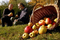 17-10-2000 - Julian Brandram preparing for Apple Day at Abbeyfield Park: discussing the crop with Lee Furness of Green City Action, who are hosting the Apple Day © David Bocking