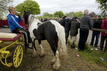 06-06-2015 - Appleby Horse Fair, Cumbria, watching the horses showing along Flashing Lane © David Mansell