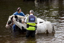 07-06-2015 - Appleby Horse Fair, Cumbria, RSPCA inspector watching horse washing in the River Eden © David Mansell