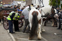 05-06-2015 - Appleby Horse Fair, Cumbria, RSPCA Equine inspectors check the horses mouth to see if it is suffering an uncomfortable horse bit © David Mansell