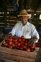 04-11-2008 - A farmworker with a box of tomatoes in the Zapotec region of the Valley of Oaxaca, Mexico © David Bacon