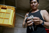 12-06-2009 - Jose Domingo Cruz Morales holds a dove he's taken out of its cage in a yellow milk crate. A community of a few hundred migrant indigenous Mixtec farmworkers from Oaxaca live in Taft. Almost everyone c... © David Bacon