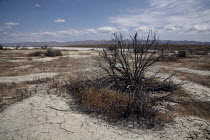 13-06-2009 - The Soda Lake in the Carrizo Plain National Monument, is a vast open grassland, rimmed by mountains and has great biodiversity. However, it is now threatened by energy development, including the threa... © David Bacon