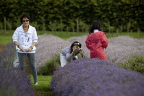 25-07-2009 - Tourists visiting a Lavender farm in the Cotswolds taking pictures of the clolorful plants. © John Harris