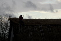 13-12-2013 - A thatcher at work on the roof of a thatched cottage, Stratford upon Avon, Warwickshire. © John Harris
