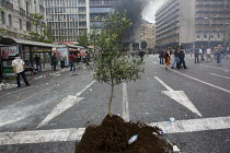 15-06-2011 - A sapling tree in the road. Confrontations between police and protesters outside the Greek parliament during a general strike against austerity cuts. Syntagma Square, Athens, Greece. © Jess Hurd