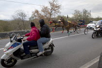 13-01-2014 - Young men illegally horse racing in Mount Etna National Park, Sicily, Italy. © Jess Hurd