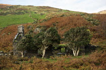 29-10-2014 - Abandoned farmhouse in the Devil's Valley or Nant yr Eira Valley. Snowdonia National Park. Wales. © Jess Hurd